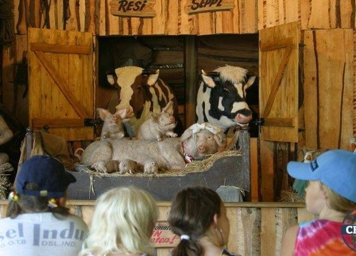 Old McDonalds Farm-Theater