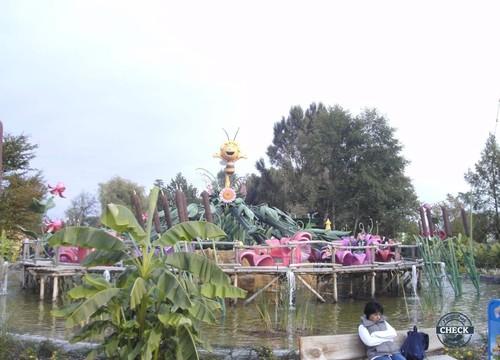 Majas Blütensplash
