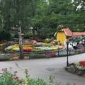Blumenmeer-Bootsfahrt