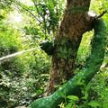 Schlange im Garten Eden